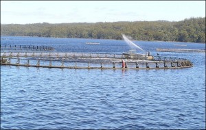 salmon farming by mrpbps