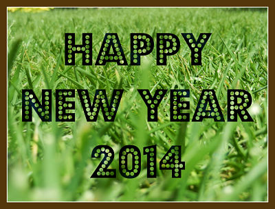 grass and new year_opt